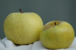 The first shipment of apples from present-day Ontario to England included produce from the Williams farm.